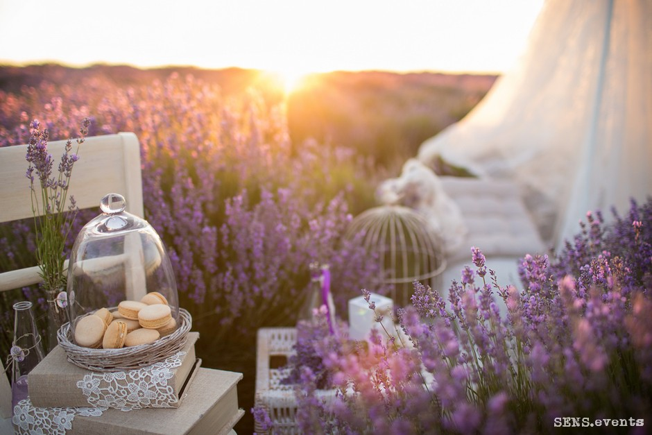 Sens_events_family_Lavender_tenderness_051