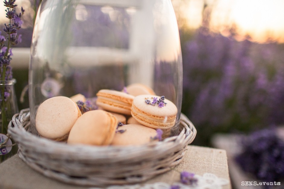 Sens_events_family_Lavender_tenderness_052